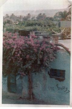 35 - Hurria Street